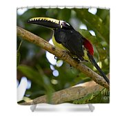 Toco Toucan Amazon Jungle Brazil Shower Curtain