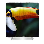 Toco Toucan Brazil Shower Curtain