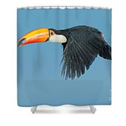 Toco Toucan In Flight Shower Curtain