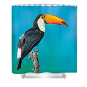 Toco Toucan Perched Shower Curtain
