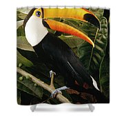 Toco Toucan Ramphastos Toco Calling Shower Curtain