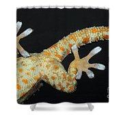 Tokay Gecko Feet Shower Curtain