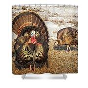 Tom Turkey And Hen Shower Curtain