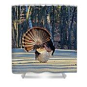 Tom Turkey Fan Shower Curtain