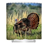 Tom Turkey Shower Curtain by Jaki Miller