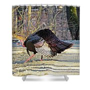 Tom Turkey Walking Shower Curtain