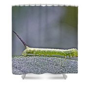 Tomato Hornworm - Manduca Quinquemaculata - Five Spotted Hawkmoth Shower Curtain