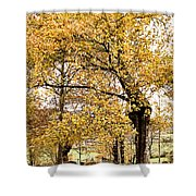 Tombs Under Oaktree Shower Curtain