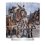 Tombstone Mules Shower Curtain