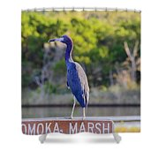 Tomoka Marsh Little Blue Heron Shower Curtain