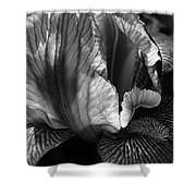 Tones Of Iris Shower Curtain