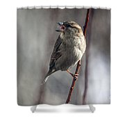 Tongue Of The Sparrow Shower Curtain