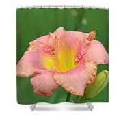 toni lynn morrison daylily- A Shower Curtain
