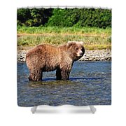 Too Much Attention Shower Curtain