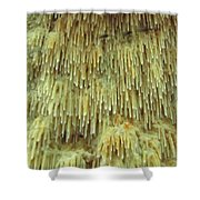 Toothed Fungi Macro Shower Curtain