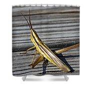 Toothpick Grasshopper Shower Curtain