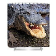 Toothy Grin Shower Curtain by Adam Jewell