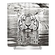 Top Cat Shower Curtain by Scott Pellegrin