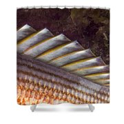 Top Fin Design Shower Curtain