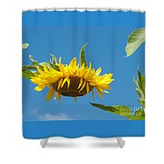 Top-heavy Shower Curtain