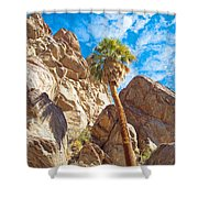 Top Of A Palm Near Top Of Andreas Canyon-ca Shower Curtain