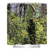 Top Of The Glades Shower Curtain