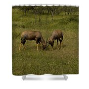 Topi   #0461 Shower Curtain