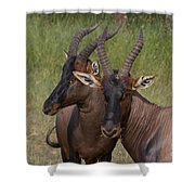 Topi   #0846 Shower Curtain