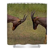 Topi   #0857 Shower Curtain
