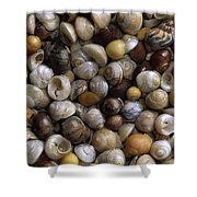 Topshells Whelk And Periwinkle Shells Shower Curtain