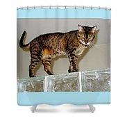 Tora On Glass II Shower Curtain