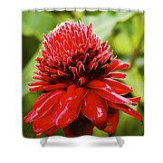 Torch Ginger Single  Shower Curtain