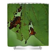 Torn Leaf Abstract Shower Curtain