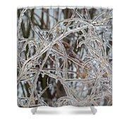 Toronto Ice Storm 2013 - Pale Frozen Grasses  Shower Curtain