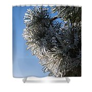 Toronto Ice Storm 2013 - Pine Needle Flowers In The Sky Shower Curtain