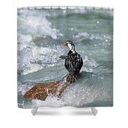 Male Torrent Duck Shower Curtain