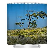 Torrey Pine On The Cliffs At Torrey Pines State Natural Reserve Shower Curtain