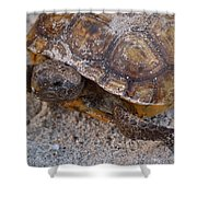 Tortoise By Nature Shower Curtain