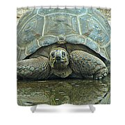 Tortoise Shower Curtain