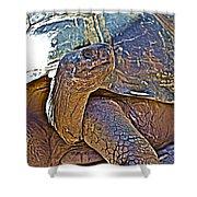 Tortoise One Shower Curtain
