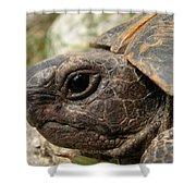 Tortoise Portrait In Macro Shower Curtain