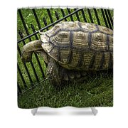Tortoise Turtle Time Shower Curtain