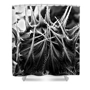 Total Eclipse Of The Sunflower - Bw Shower Curtain