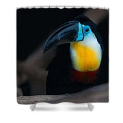 Toucan 1 Shower Curtain