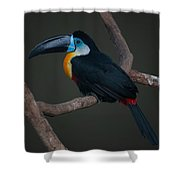 Toucan 2 Shower Curtain