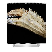 Toucan Crab Claw Shower Curtain