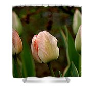 Touch Of Peach Shower Curtain