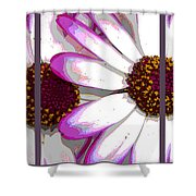 Touch Of Pink Osteospermum Trio Sample Shower Curtain