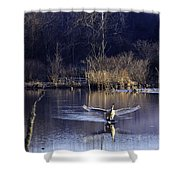 Touchdown Trumpeter Swan Shower Curtain