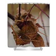 Touched By Jack Frost Shower Curtain